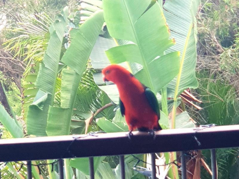 Wildlife on the deck