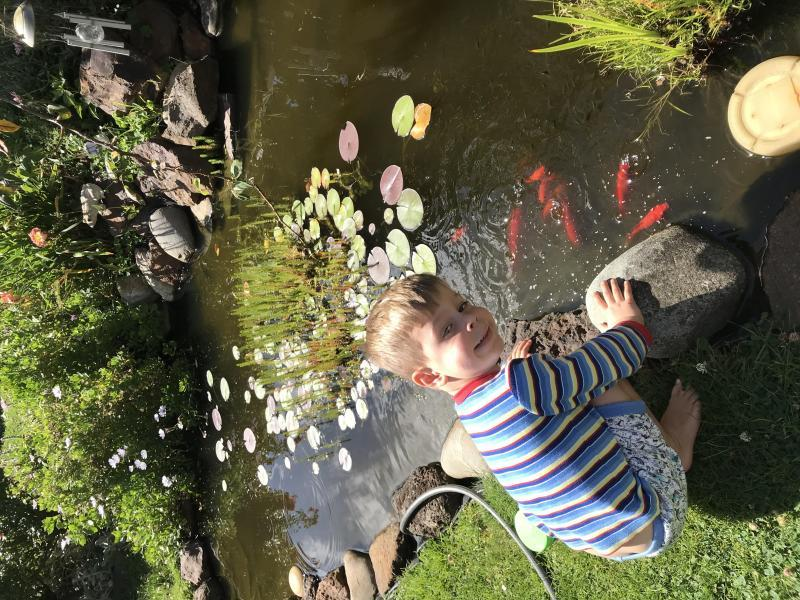 My grandson feeding the fish in the pond. In my back garden