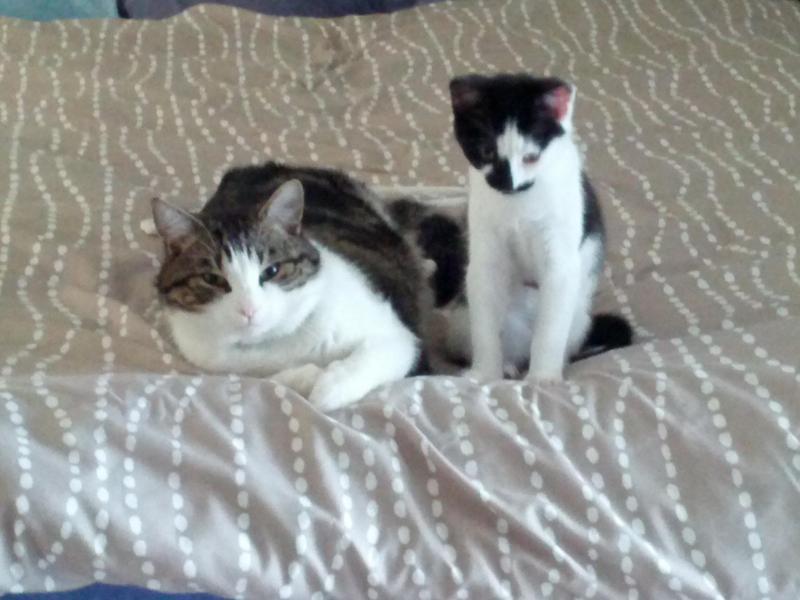 Max and Oreo