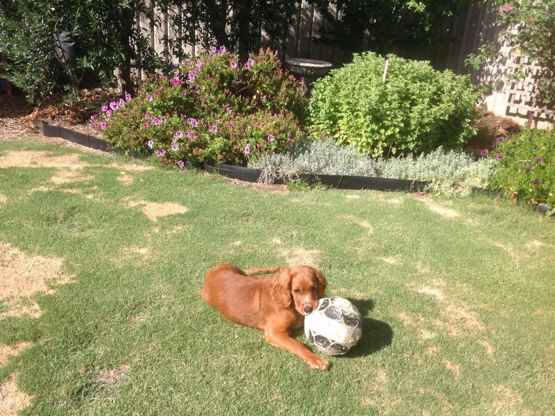 Backyard and Boris the dog