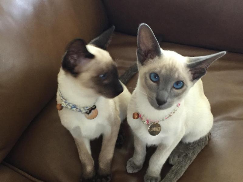Homestay Cats
